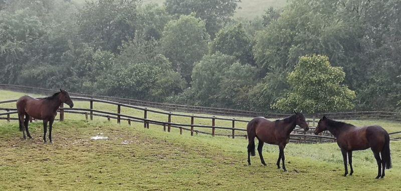 The mares out with John Perriss enjoying their summer holiday.. Ibiza?