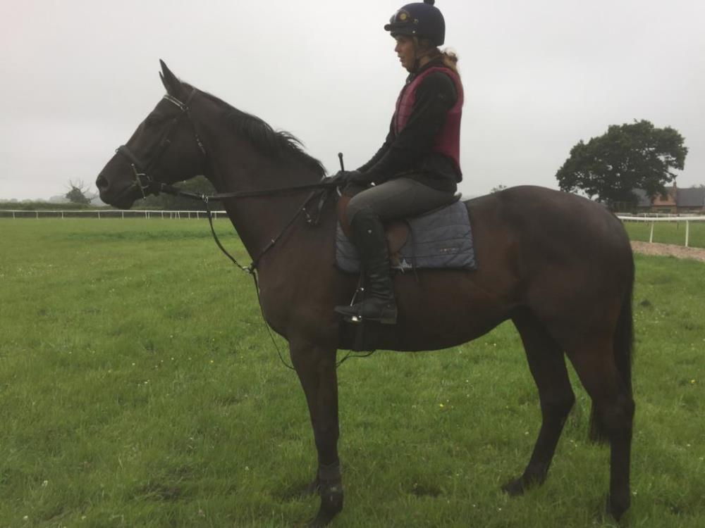 Phil Andrew's 2016 Gelding by Noroit