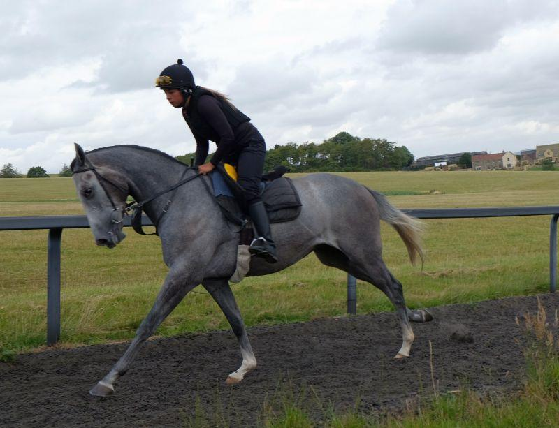 The 3 year old Gelding by Kayf Tara out of Silver Spinner.. For Sale