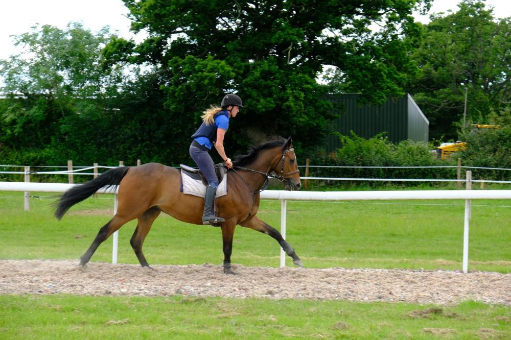 Alex Harris riding The 3 year old gelding by Valirann (FR) x Broken Thought
