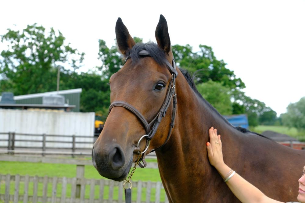 3 year old gelding by Yeats x Gold Strike