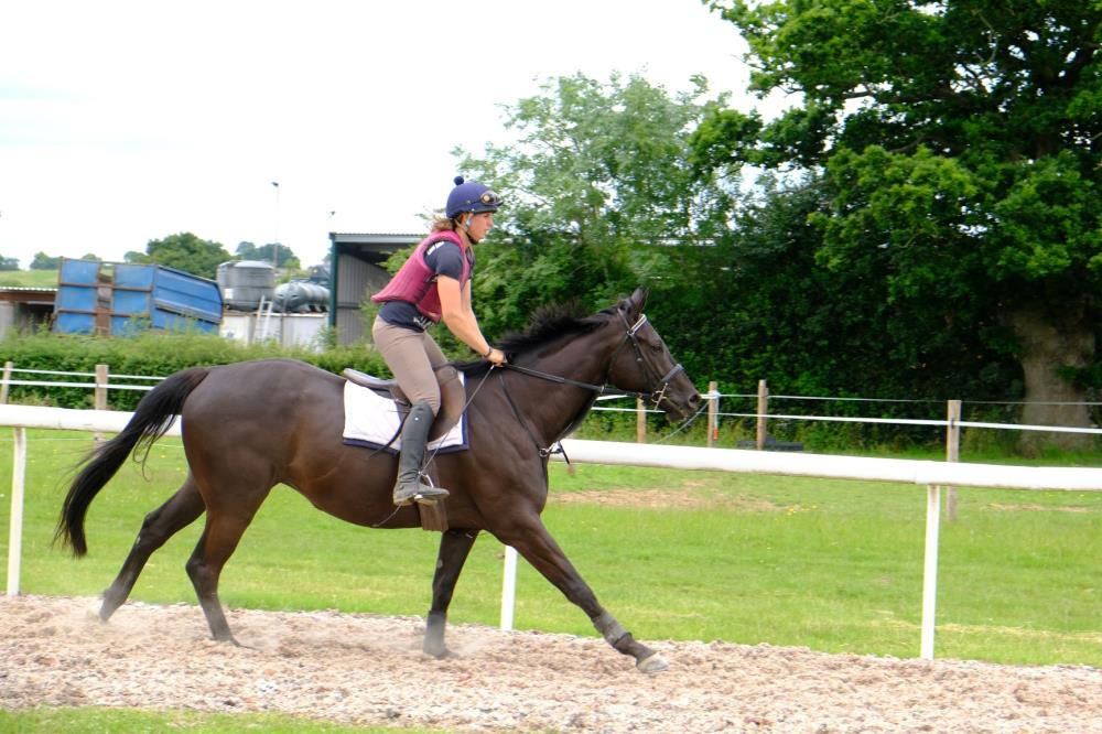 Steph Pollard riding Phil and Gill Andrews's 3 year old Gelding by Noroit (GER) x Visiorienne (FR)
