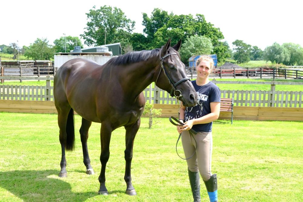 Phil and Gill Andrews's 3 year old Gelding by Noroit (GER) x Visiorienne (FR)