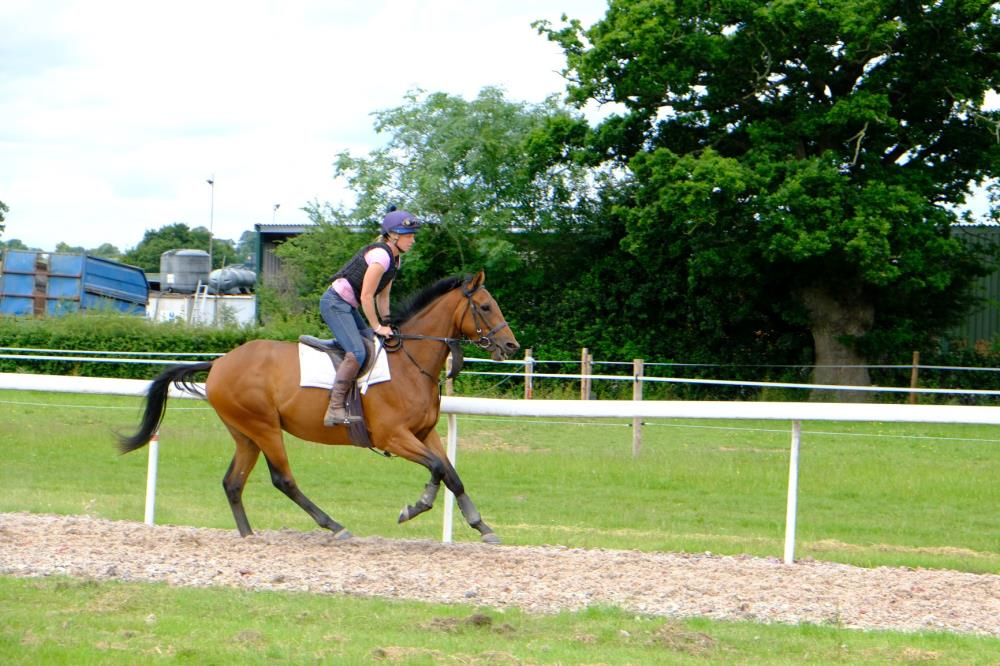 Megan Harper riding The 3 year old gelding by Schiaparelli (GER) x La Harde (FR)