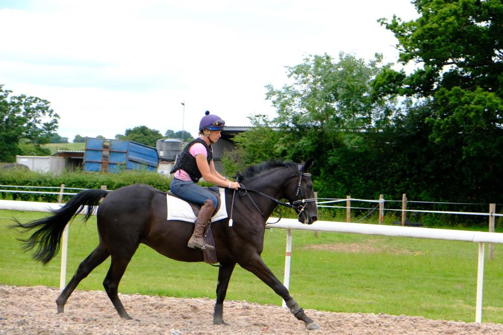 Megan Harper riding the 3 year old gelding by Sageburg (IRE) x Slevoy Ahoy..