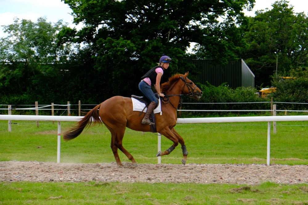 Megan Harper riding the 3 year old gelding by Schiaparelli (GER) x Bisaat (USA).