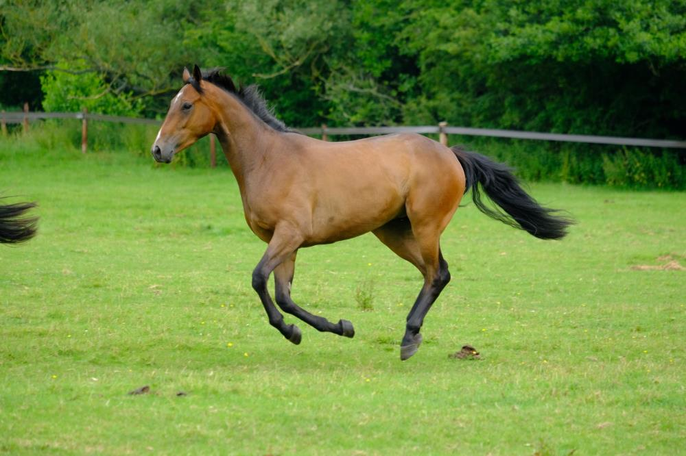 3 year old gelding by Valirann (FR) x Broken Thought ..For sale