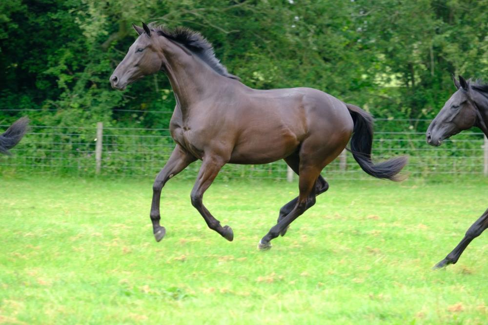 A monster?..Phil and Gill Andrews's 3 year old Gelding by Noroit (GER) x Visiorienne (FR)