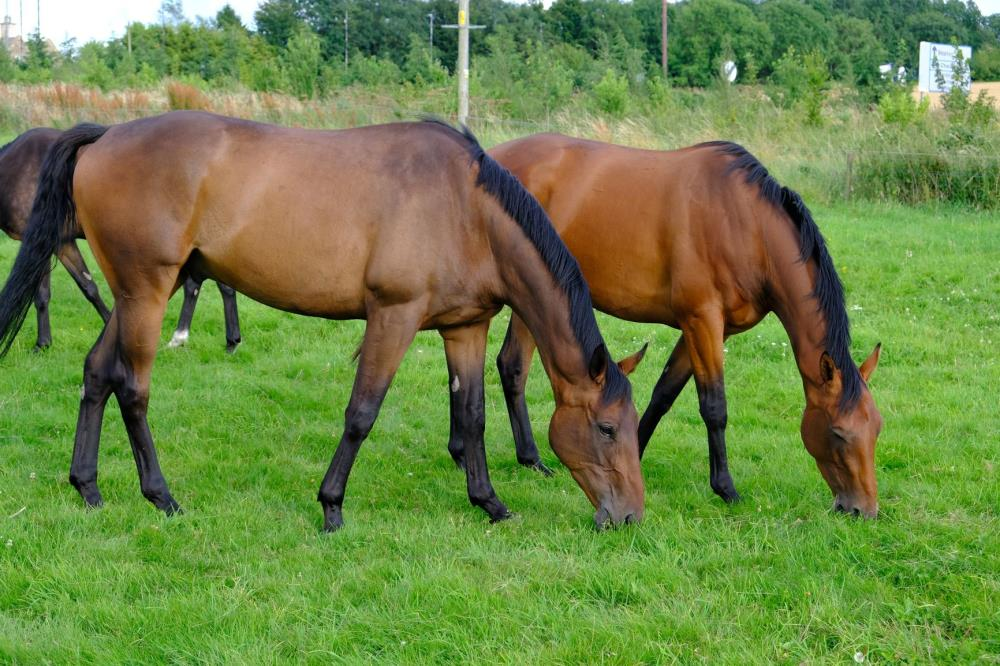 The 3 year old by Yeats out of Gold Strike with the Schiaparelli out of La Harde
