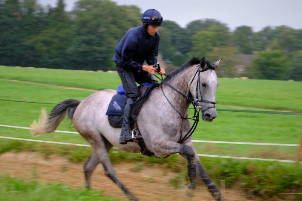 Mr Grey Sky and Chester Williams