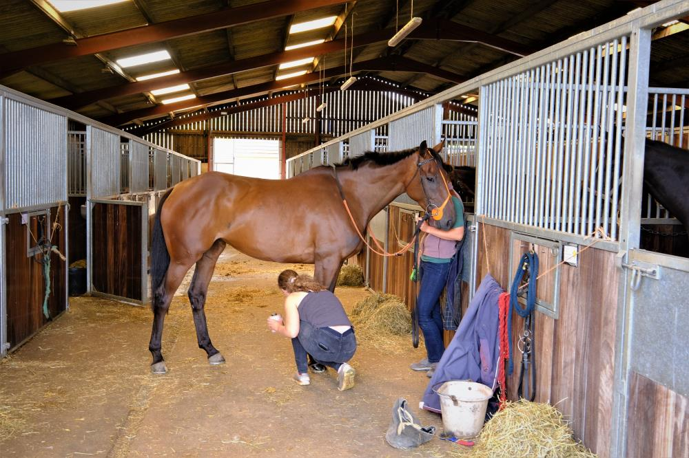 Cinderbella having her feet painted.. sadly no photo because she wanted to watch the horse ride rather than pose for a photo