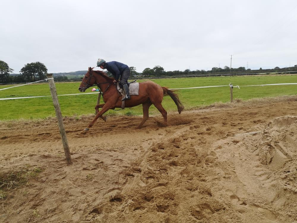 Imperial Icon cantering around Kevin Ross's sand gallop