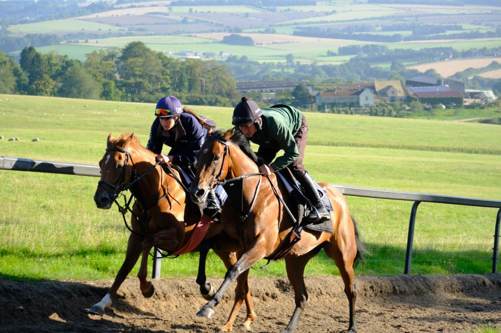 Yeavering Belle and Drumreagh working second lot
