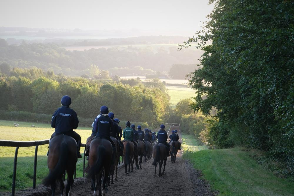 Heading back down the gallop after first lot