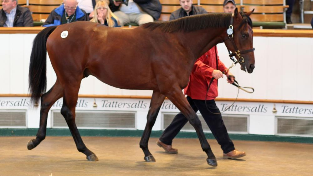 The Coln Valley Stud-consigned Kingman colt before bringing 2,300,000gns from Godolphin