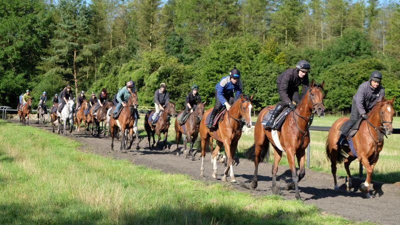 Trotting back down the gallops