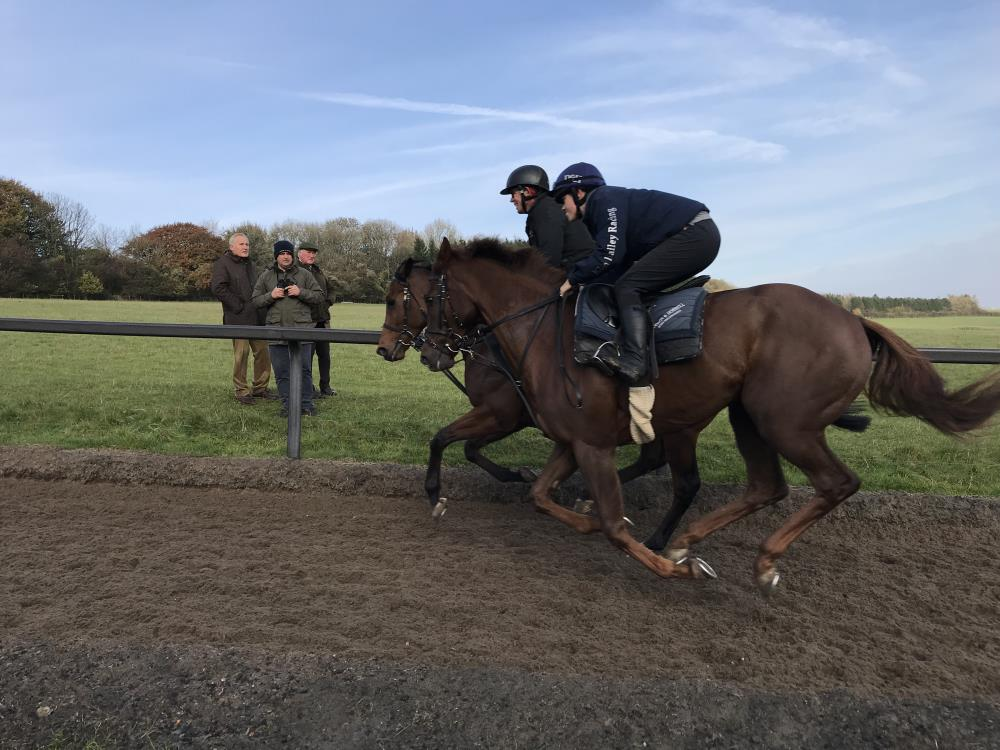 Horses on the gallops yesterday