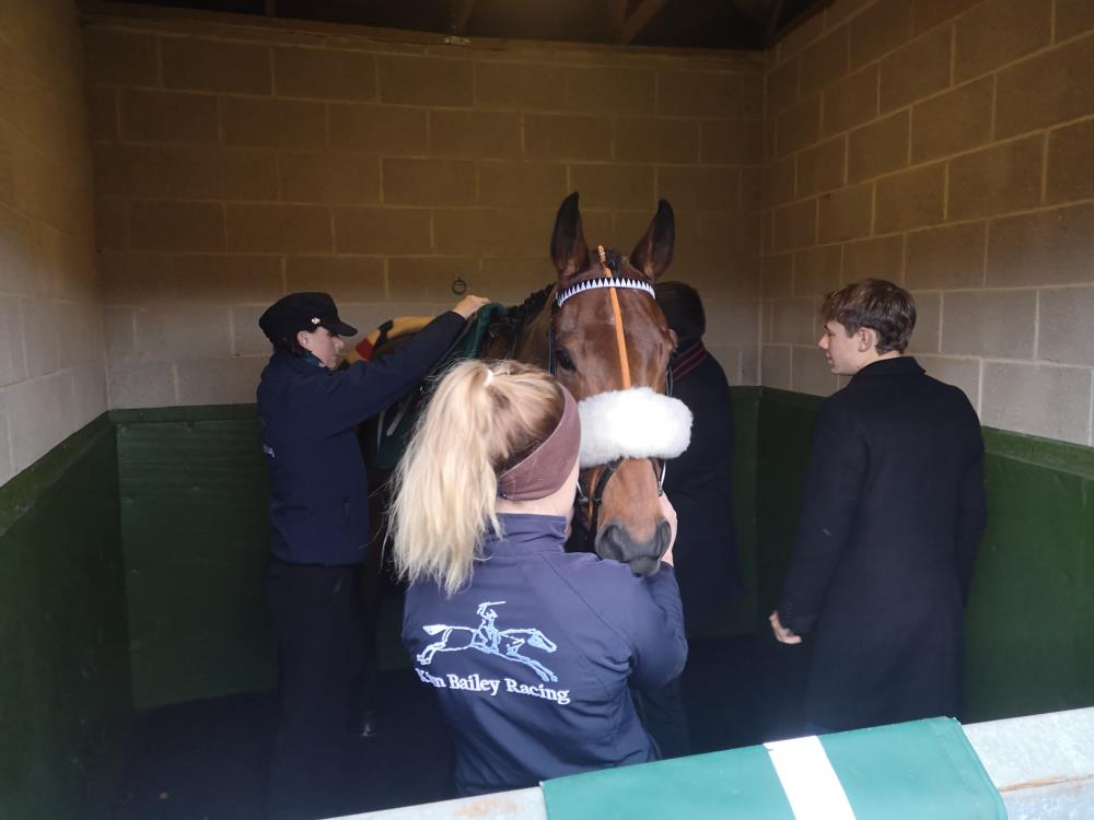 Imperial Aura being saddled before his race yesterday