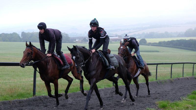 Crazy Jack, Net Work Rouge and Trojan Star in behind