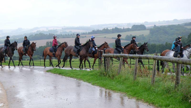 Heading to the gallops in the rain this morning