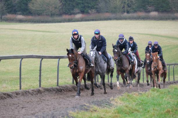 Cresswell Legend leading second string up the gallops