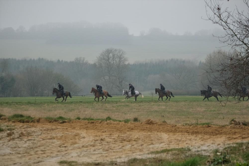 Cantering on the sand gallop