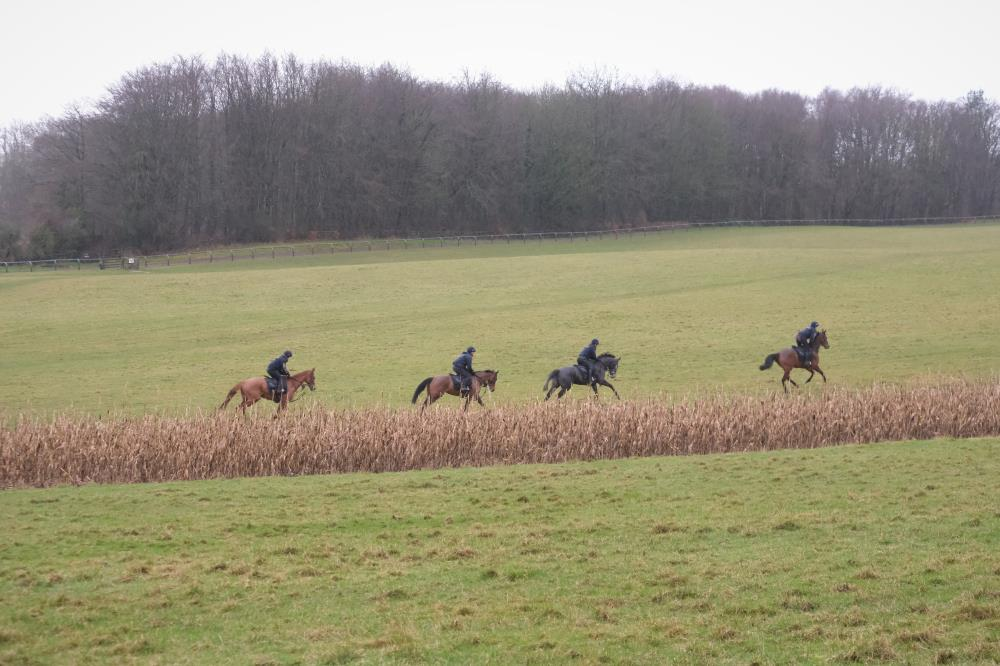 Cantering on the grass