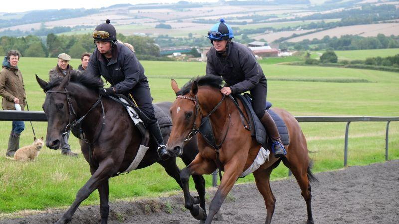Cascaye and The Black Sam Bellamy filly cantering upsides