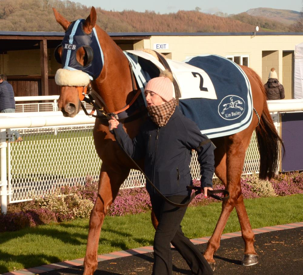 Another Venture in the paddock before his race.. John Full took these photo.. thanks John
