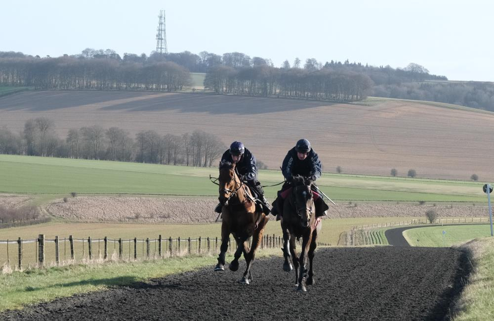 Imperial Aura and Vinndication working in Lambourn yesterday