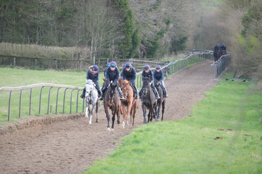 Cantering this morning