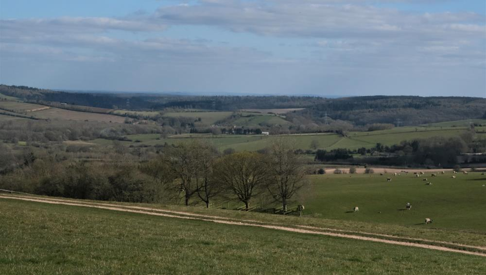 The view from Thorndale looking towards Lambourn...