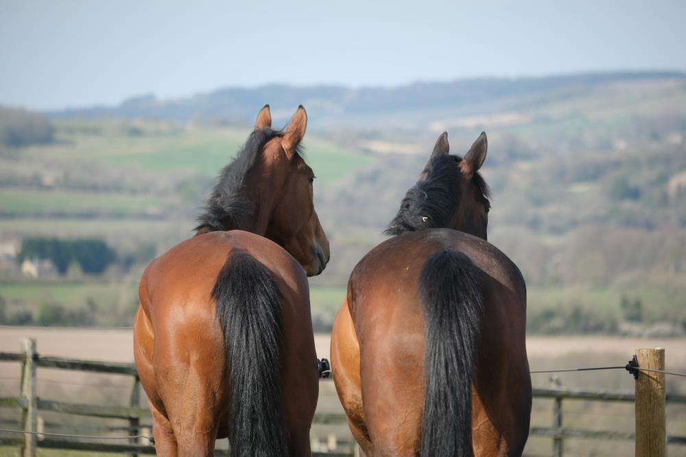 Flirtatious Girl and Diamond Gait admiring the view..