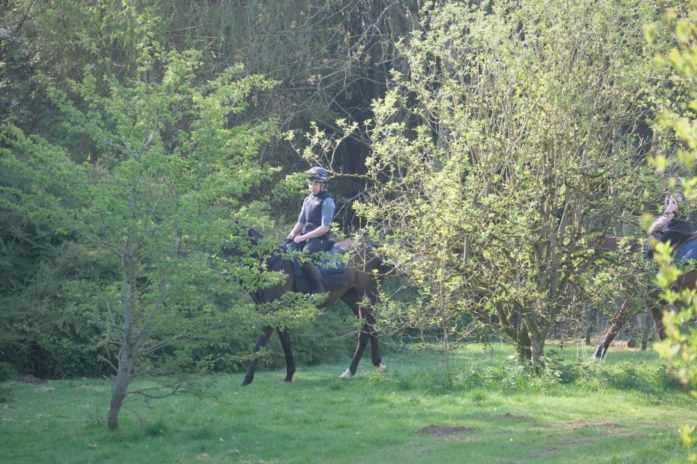 Thursday is our easy day. Blazon and Rhosneigr head off round the farm.. or woods