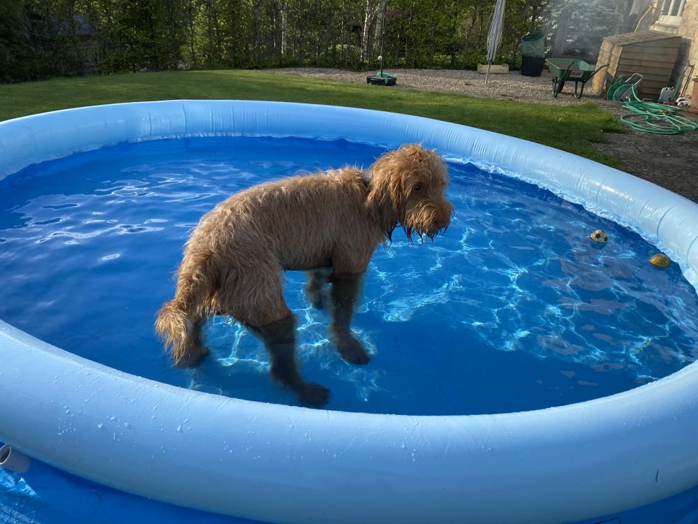 Dougie has his own pool!!