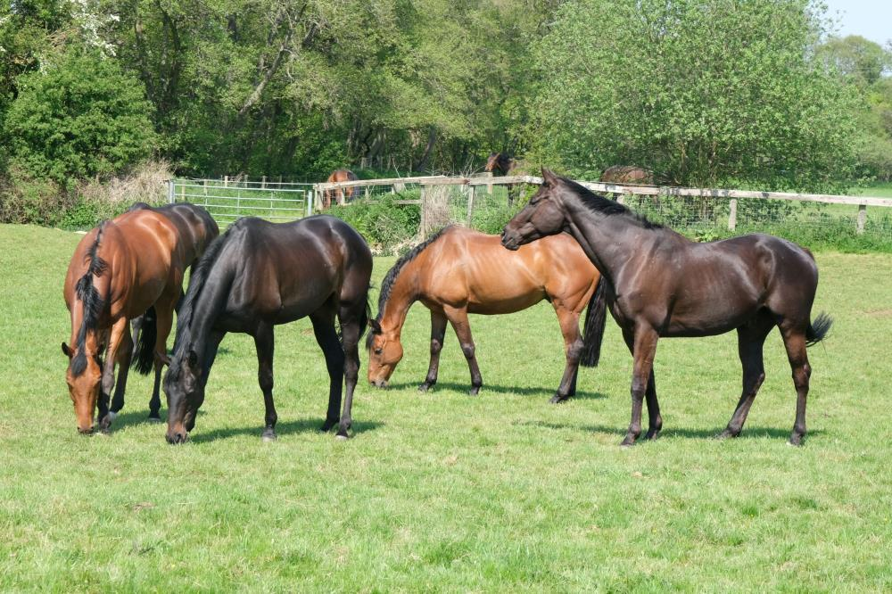 Mon Palois, Party Fuzz, Cresswell Legend and Duke Of Earl