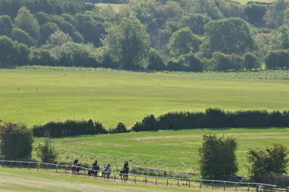 Cantering up the gallops