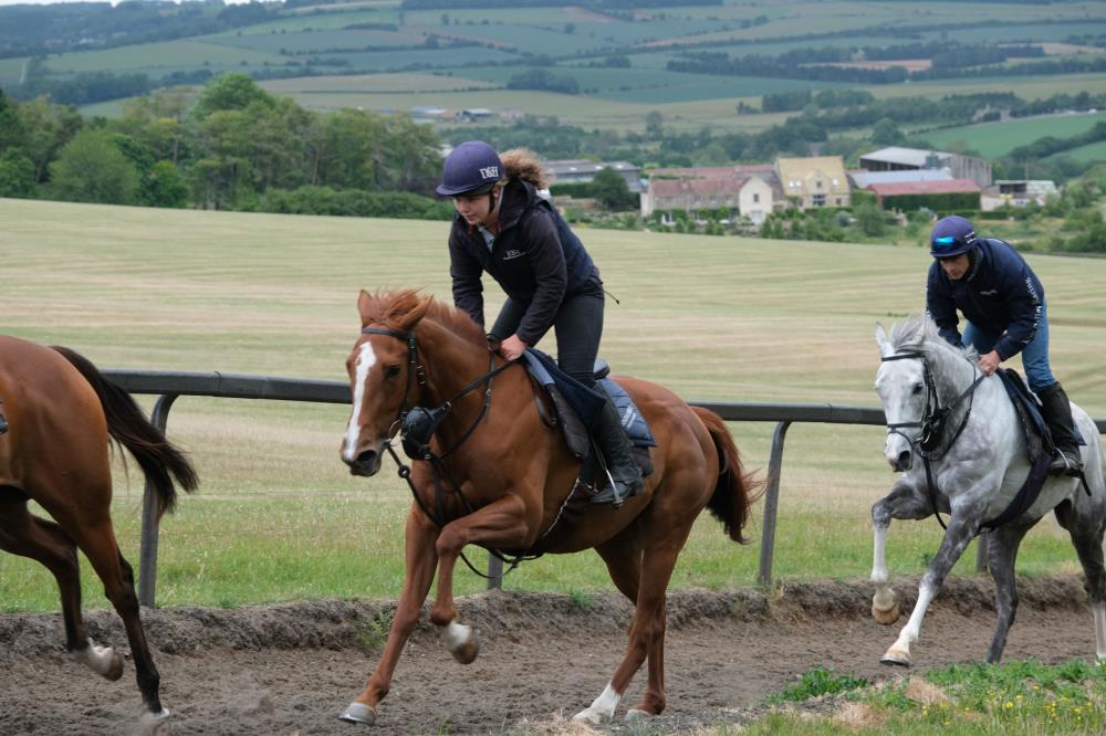 4 Year Old Chestnut Filly : Schiaparelli/ Miniature Rose