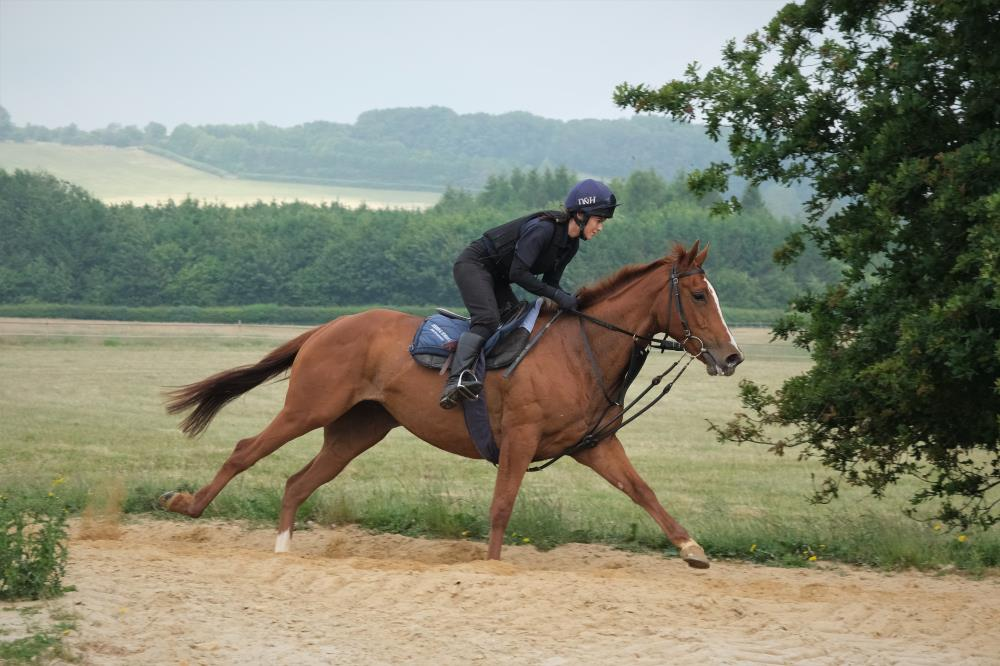 The  Schiaparelli OUT OF: Miniature Rose 4 year old filly