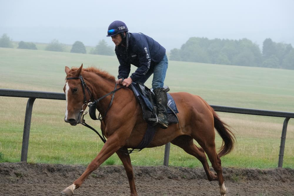The  4 year old Schiaparelli / Miniature Rose 4 year old filly