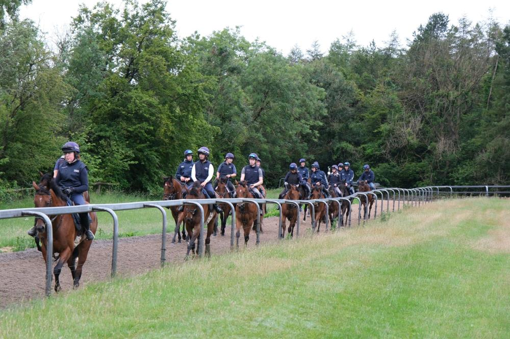 First lot walking down the gallop