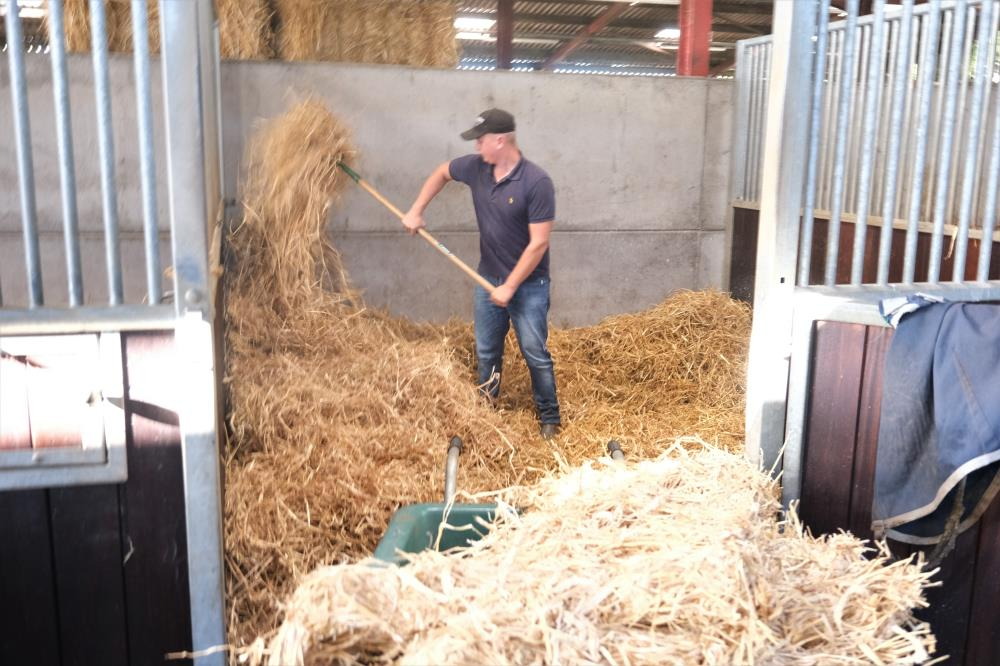 Dave beds up all the horses boxes while they are out at excercise