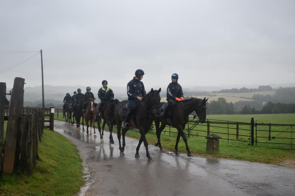 Horses on their way to the gallops