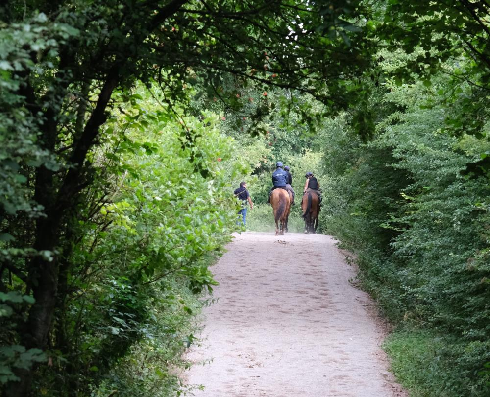 A new surface on the track through the woods to the gallop