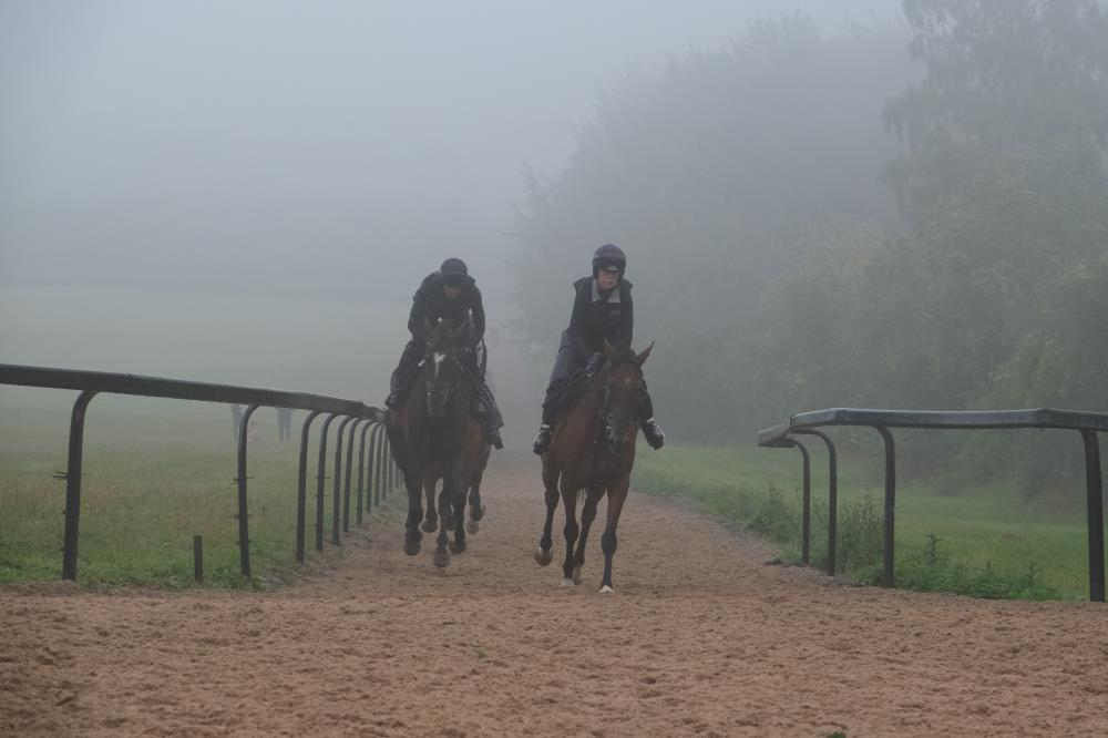 Appearing out of the mist.. Espoir de Romay and Bobhopeornohope
