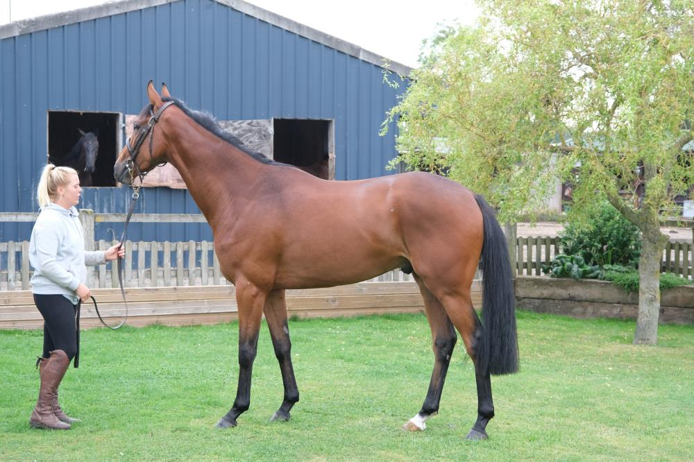 A couple of shares left in this stunning son of Walk In The Park.. Ring Peter  Kerr..07901763643