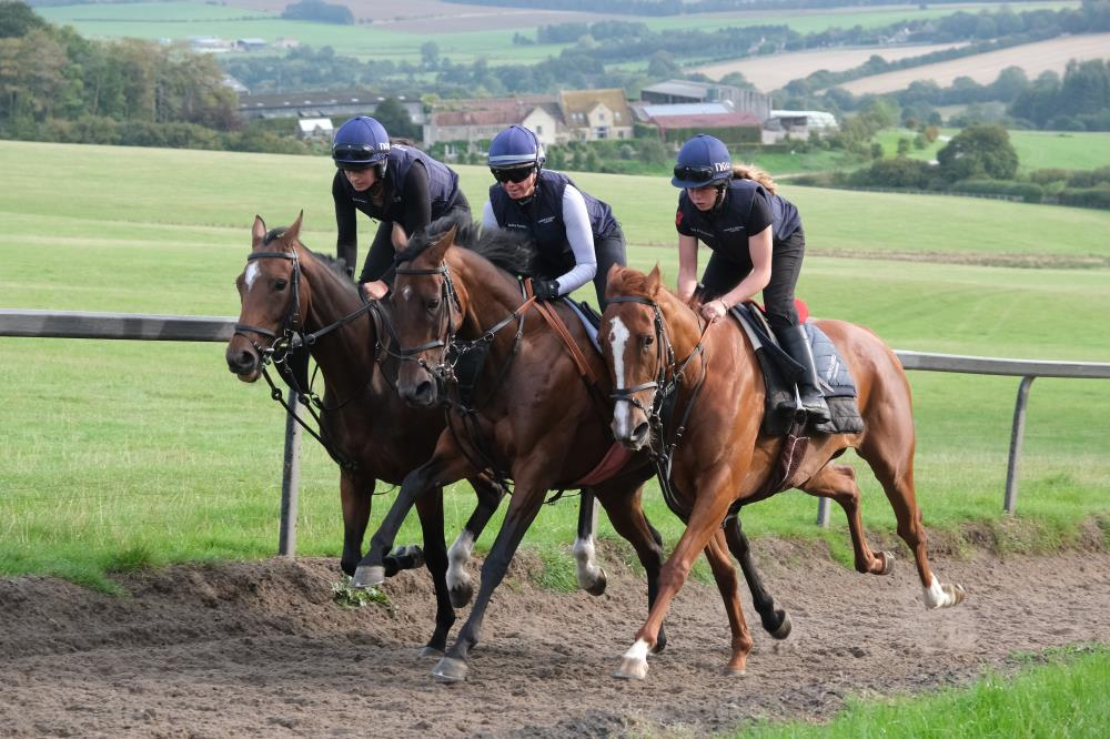 Sea Story, Drumreagh and Schiaparelli out of Miniature Rose filly