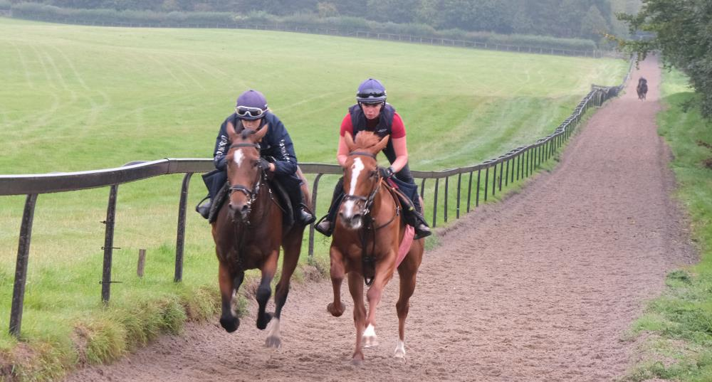 Sea Story and Schiaparelli out of Miniature Rose filly