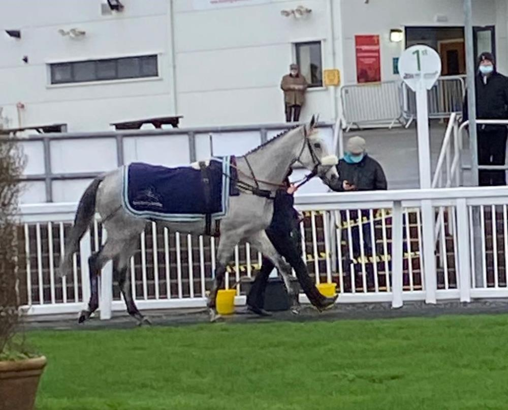 Mr Grey Sky in the paddock at Ffos Las