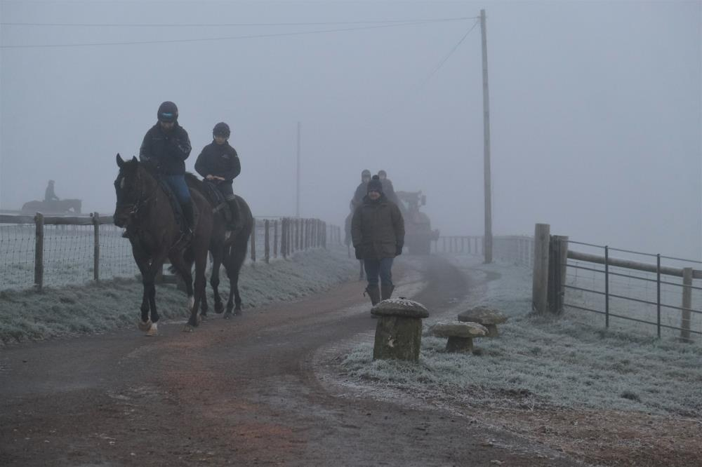Wandrin Star leading the string on a cold and frosty morning.